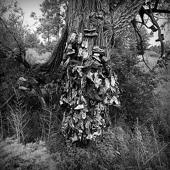 Shoe Tree by Gregory Varano