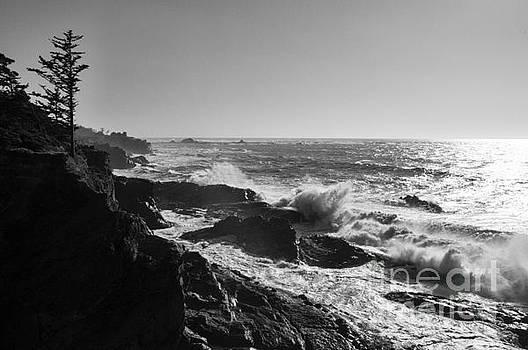 Vivian Christopher - Shore Acres Coastline