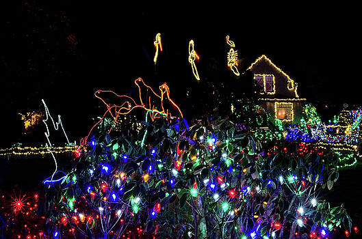 Shore Acres Xmas Lights One by Thom Zehrfeld