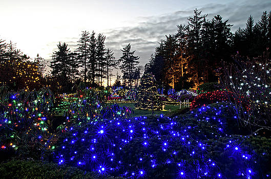 Shore Acres Xmas Lights Two by Thom Zehrfeld