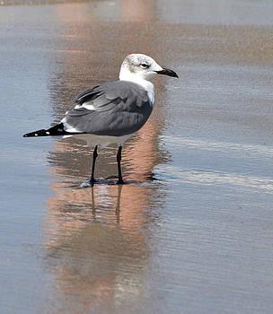 Shore Bird Delray Beach by Allan Einhorn