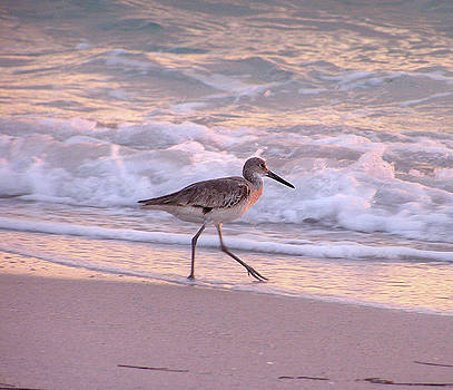 Shorebird  by Debbie Kiewiet