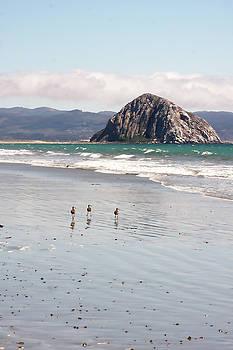 Art Block Collections - Shorebirds at Morro Rock