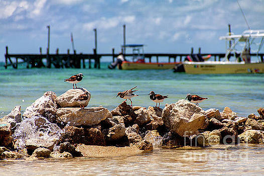Shorebirds on Isla Mujeres by David Daniel