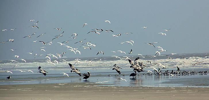 Shorebirds on the Beach by Rosanne Jordan