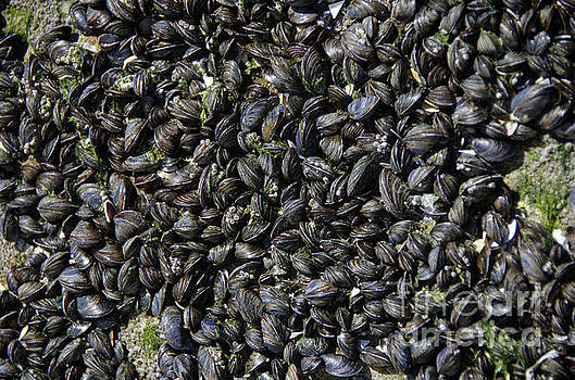 Show Us Your Mussels by Scott Evers