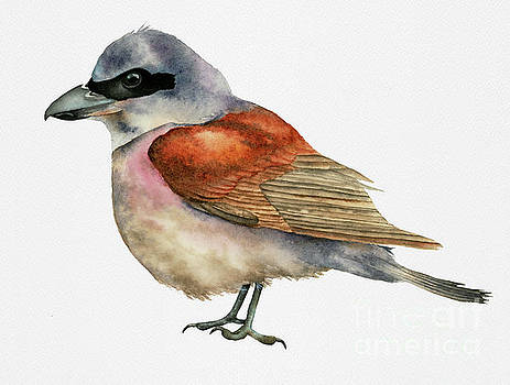 Shrike Bird Watercolor Painting by NamiBear