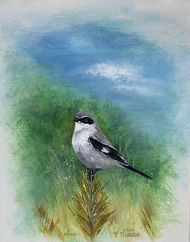 Shrike in the Pine by David Jansen
