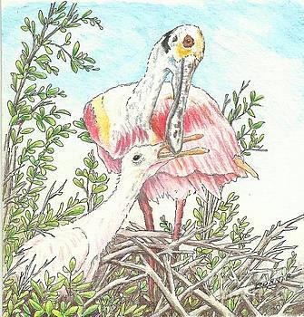 Shrimp for Breakfast by Sue Bonnar