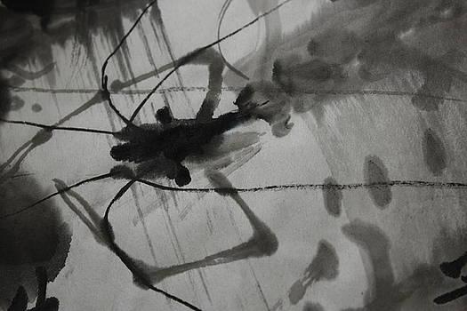 Shrimp ii by Tom Lee