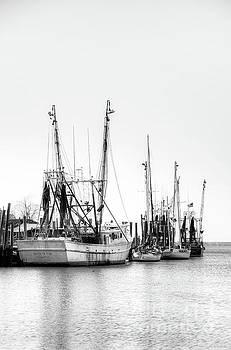 Shrimp time by Matthew Trudeau