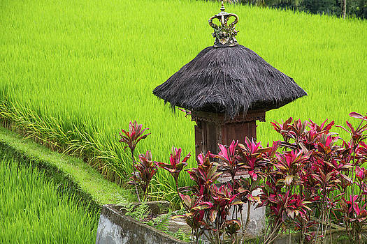 Shrine In Rice Field by Emily M Wilson