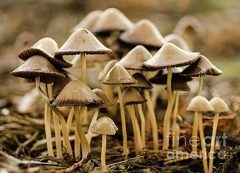 Shrooms by Nick Boren