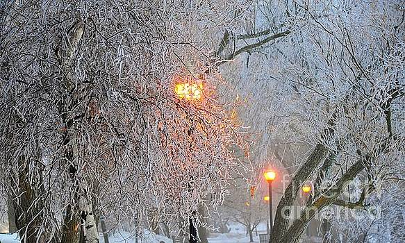 Terri Gostola - Shrouded in Frost