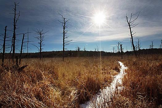 Shrub swamp by Sue Collura