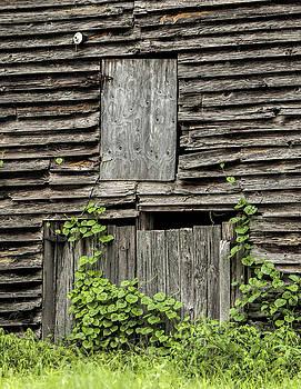 Shut the Barn Door by Laura Greene