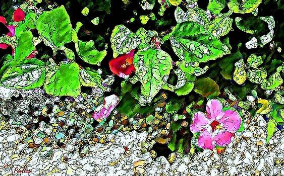 Shy Hibiscus by Peggy De Haan