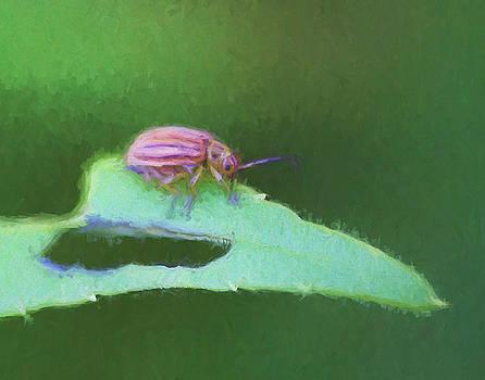 Shy Little Bug by Kathy Clark