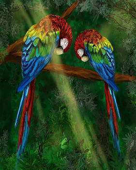 Shy Parrot Love by Tiffany Lynn Thielke