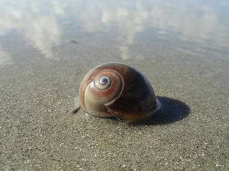 Shy Snail by Christopher Spicer