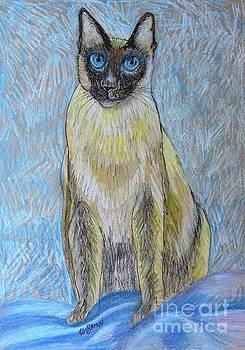Caroline Street - Siamese Cat