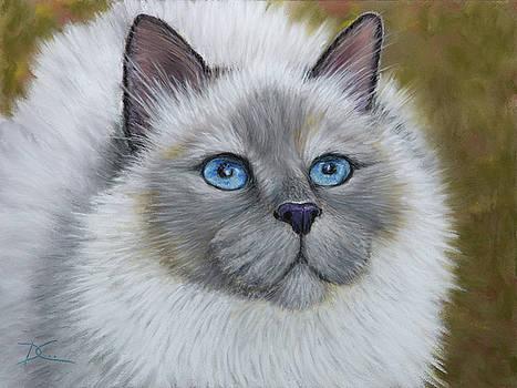 Dee Carpenter - Siamese Cat