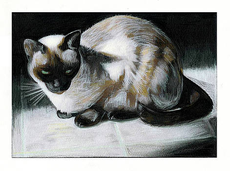 Siamese Cat by Turtle Caps