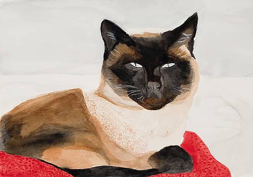 Siamese Cat by Marcella Morse