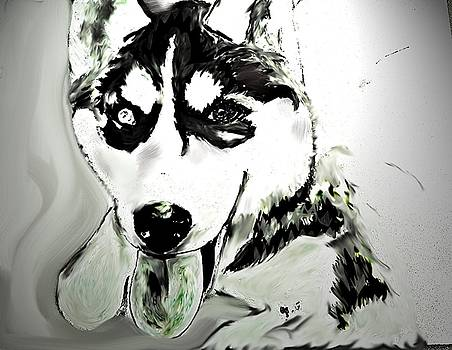 Siberian Husky by Crystal Webb