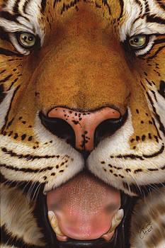 Siberian Tiger II by Wayne Pruse