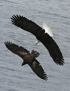 Side by Side Eagles NW3074 by Mary Gaines
