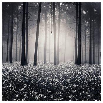 Siempre hay una luz by Luis  Beltran