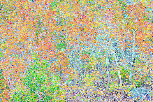 Sierra Autumn Color Palette by Ram Vasudev