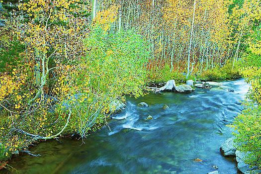 Sierra Autumn Splendor by Ram Vasudev