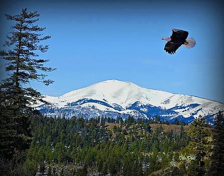 Sierra Blanca Mountian by Dale Paul