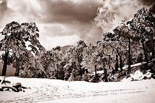 Sierra de Guadarrama by Felix M Cobos