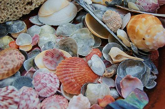 Siesta Shells by Patricia Thirion