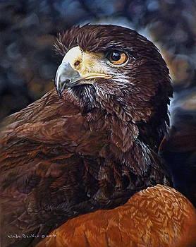 Sig the Harris Hawk by Linda Becker