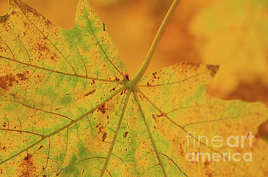 Signs Of Autumn  by Nick Boren