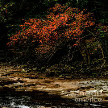 Signs of Fall by Thomas R Fletcher