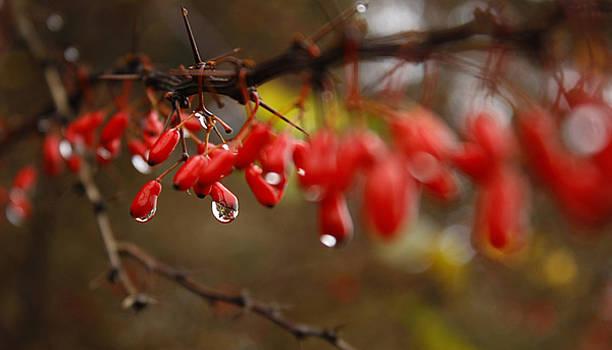 Silence After The Rain by Cristina Rettegi