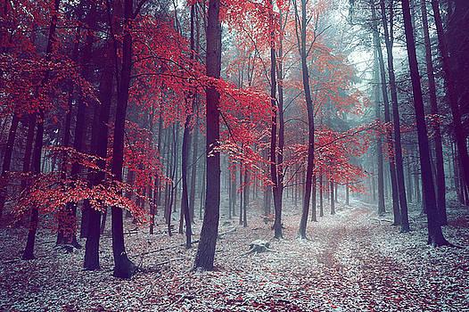 Silence of the Trees by Jenny Rainbow