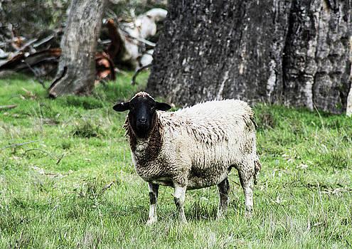 Silence Of The Umm Sheep 1 by Naomi Burgess