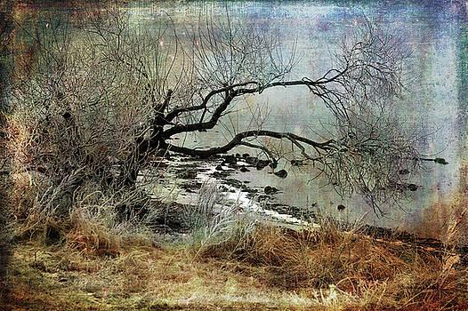 Silent Beach by Randi Grace Nilsberg