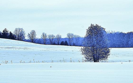 Silent Fields by Al Fritz