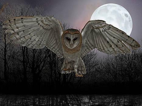 Silent Night by Nigel Follett