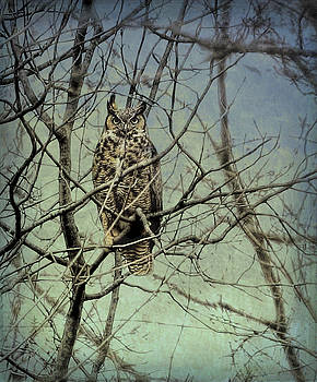 Silent Stare by James Figielski by Paulinskill River Photography