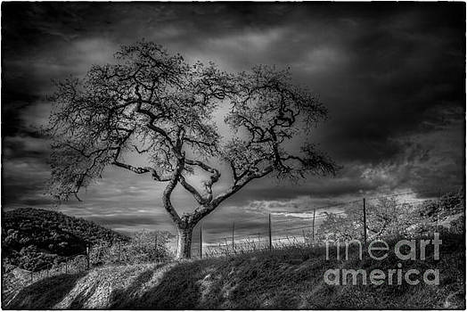 Silent Tree by James A Crawford