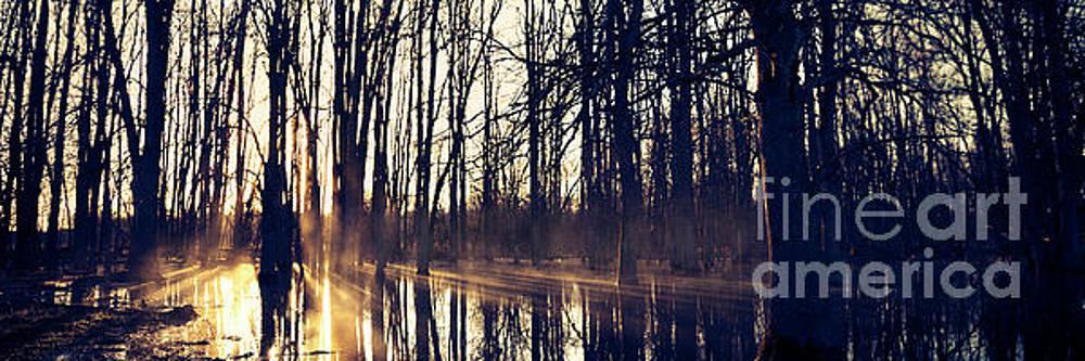 Silent Woods #4 by RicharD Murphy