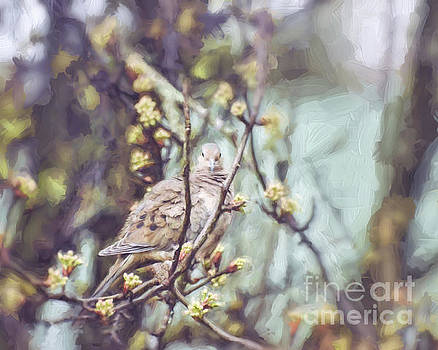 Silently Waiting - Mourning Dove  by Kerri Farley